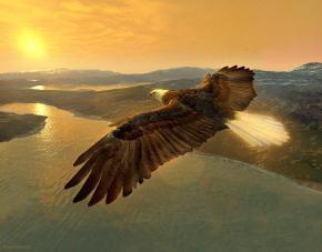 soaring-eagle-ray-downing