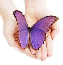slide_butterfly1